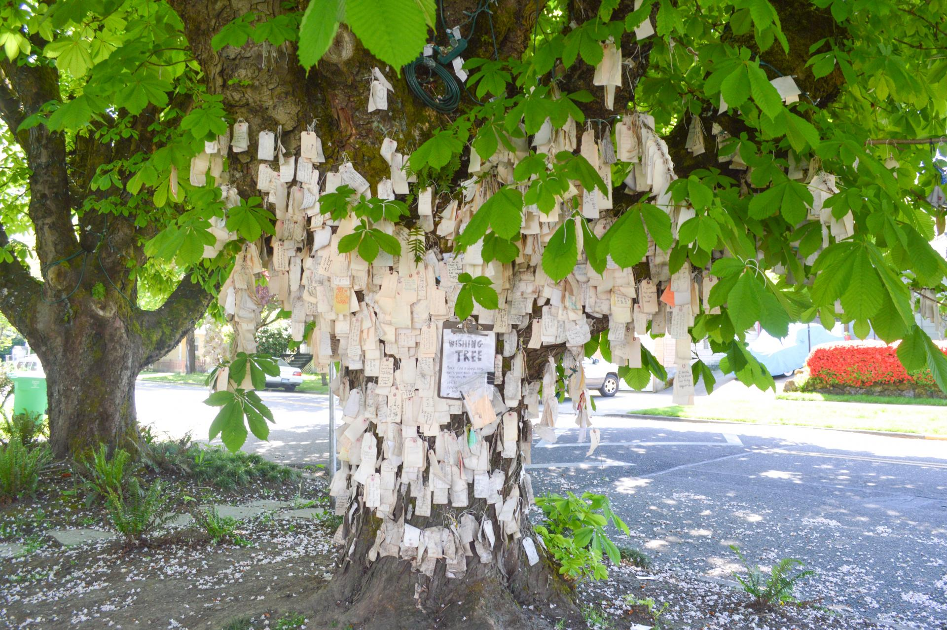 Portland Wishing Tree