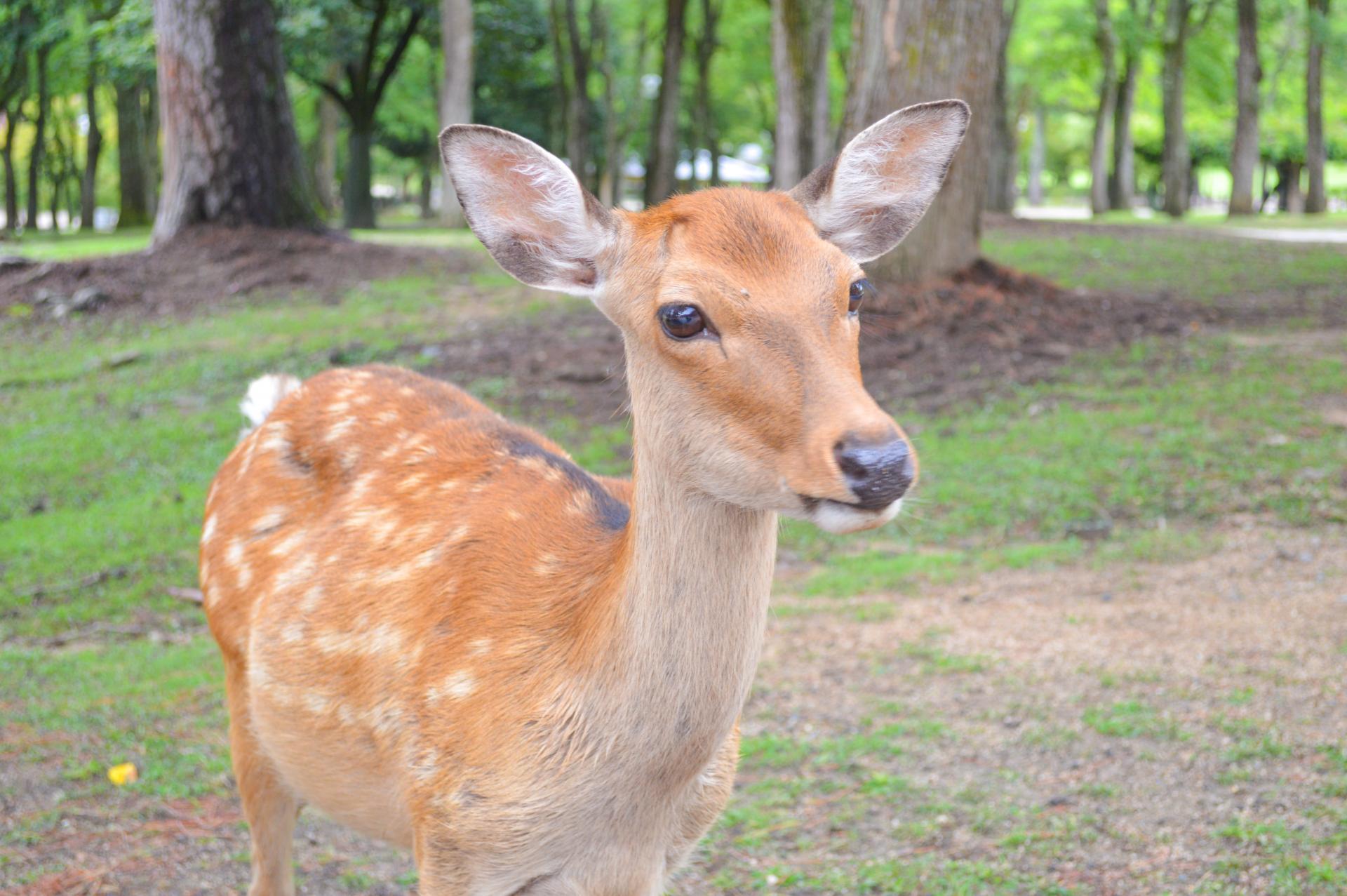 feeders brothers buck my feeder shotgun boss blog deerupclose deer illinois opener herman