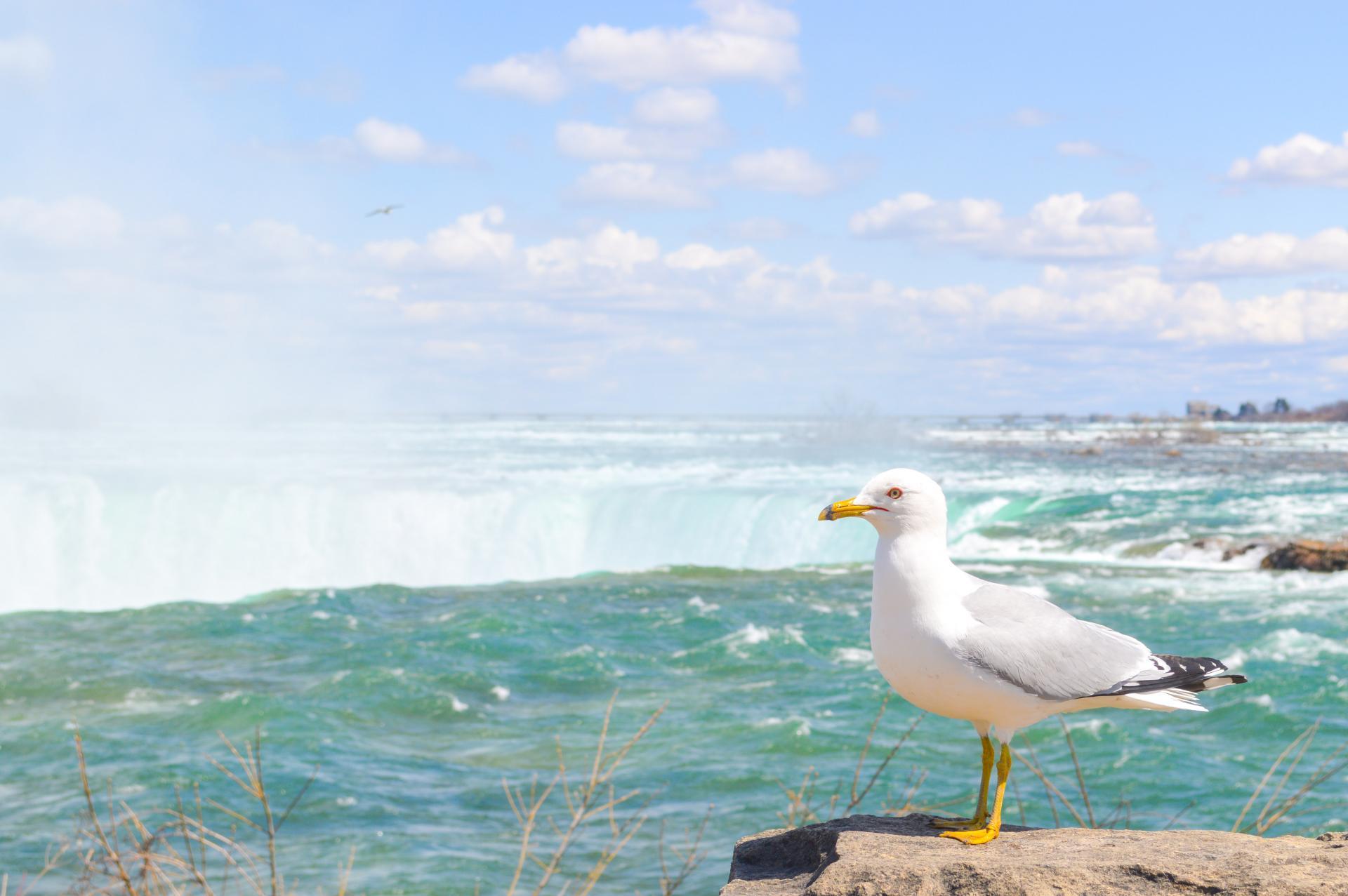 Niagara-Falls-12