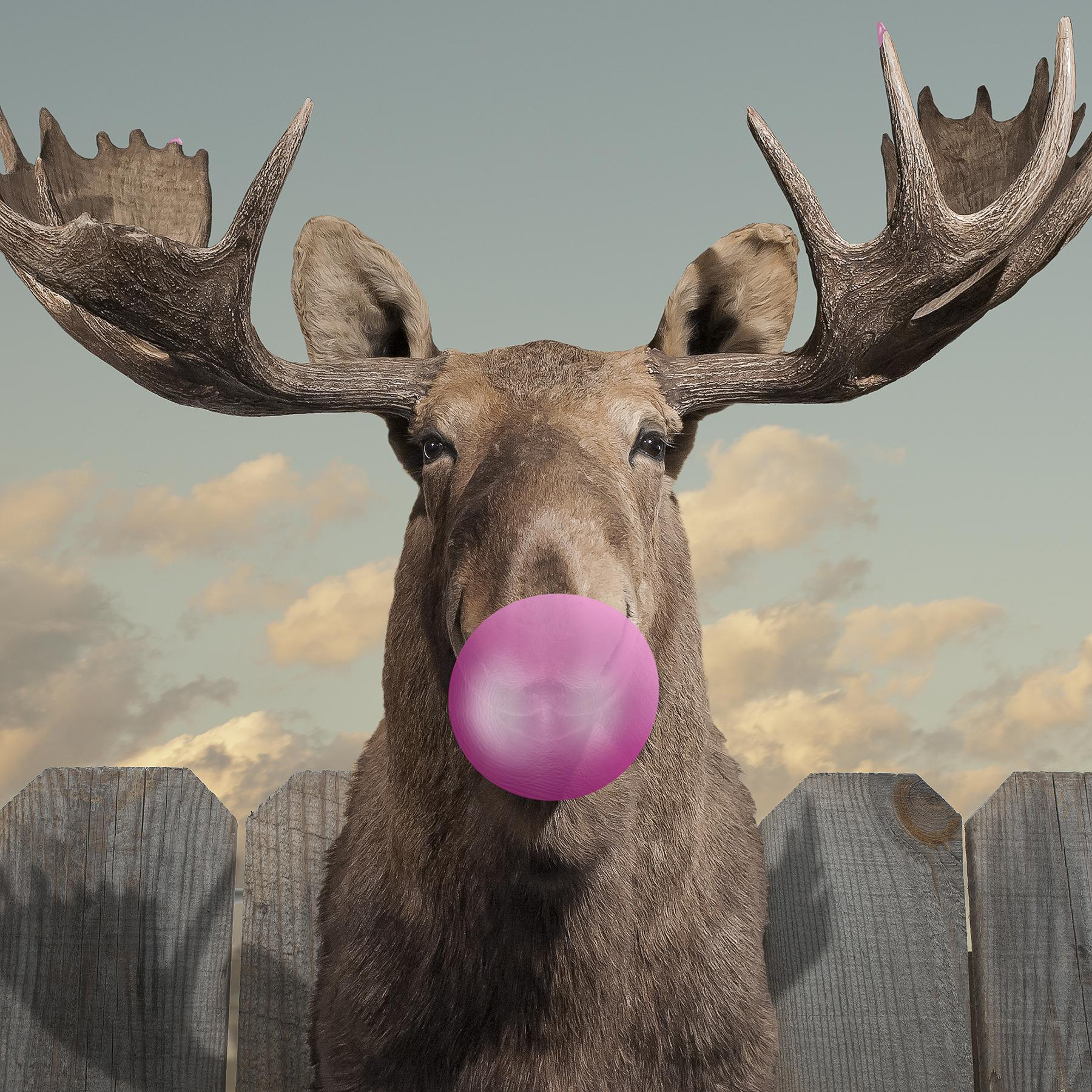 Moose Bubblegum Bubble Mural