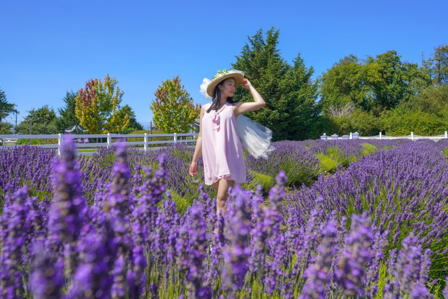 The Most Beautiful Sequim Lavender Farms To Visit This Summer