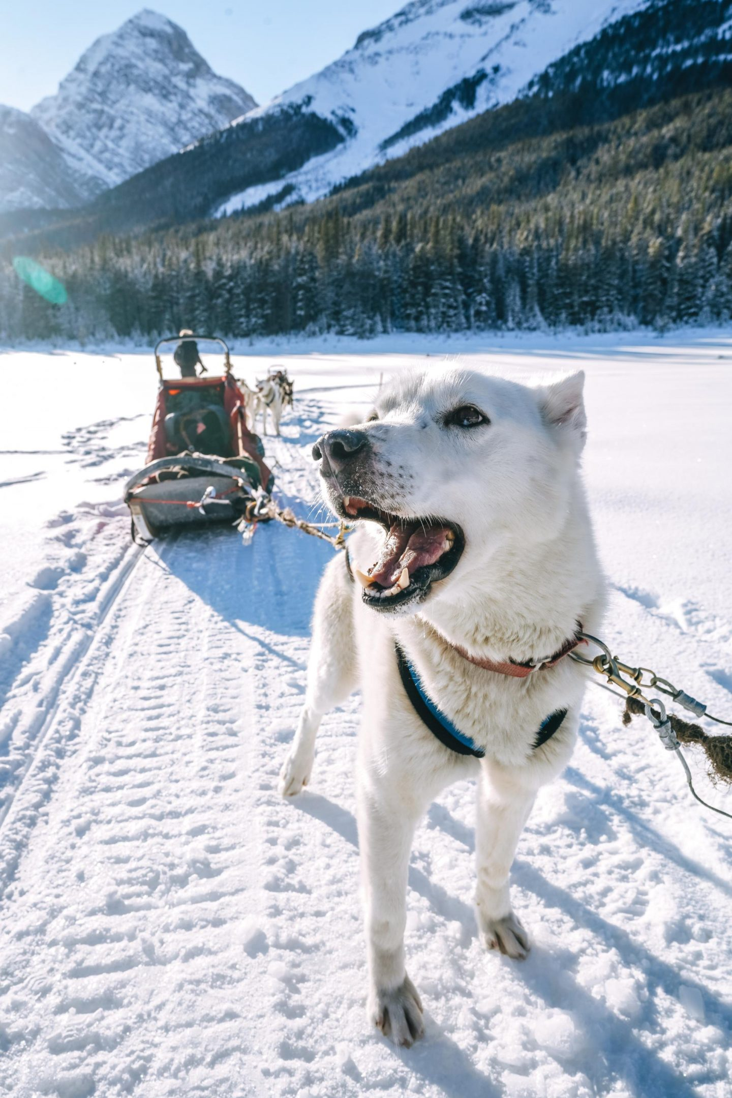 Dog sledding with Mad Dogs & Englishmen.