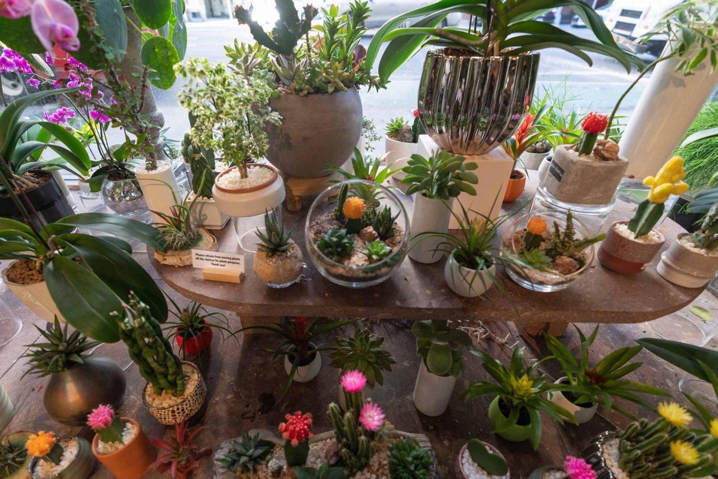 Beautiful plants at Remi Flower and Coffee.