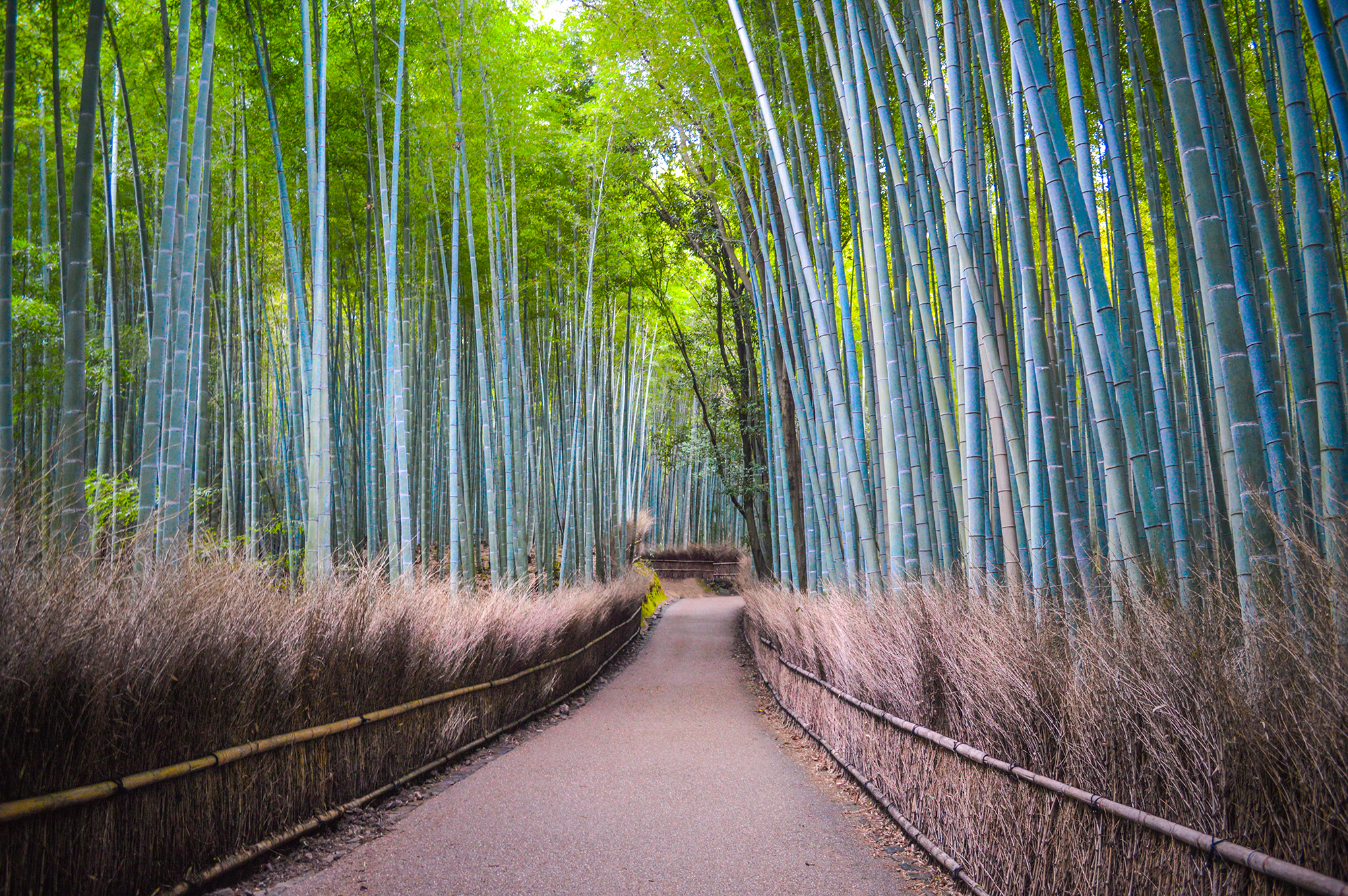 Kyoto's Arashiyama Bamboo Grove is a Japan must-see!