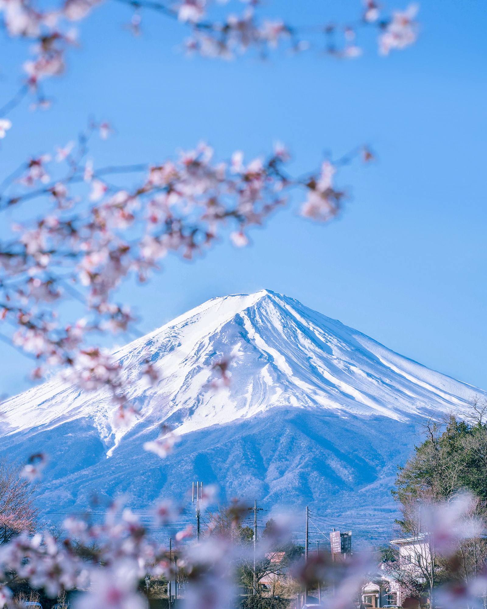 Breathtaking view of Mt. Fuji framed by blooming cherry blossoms.