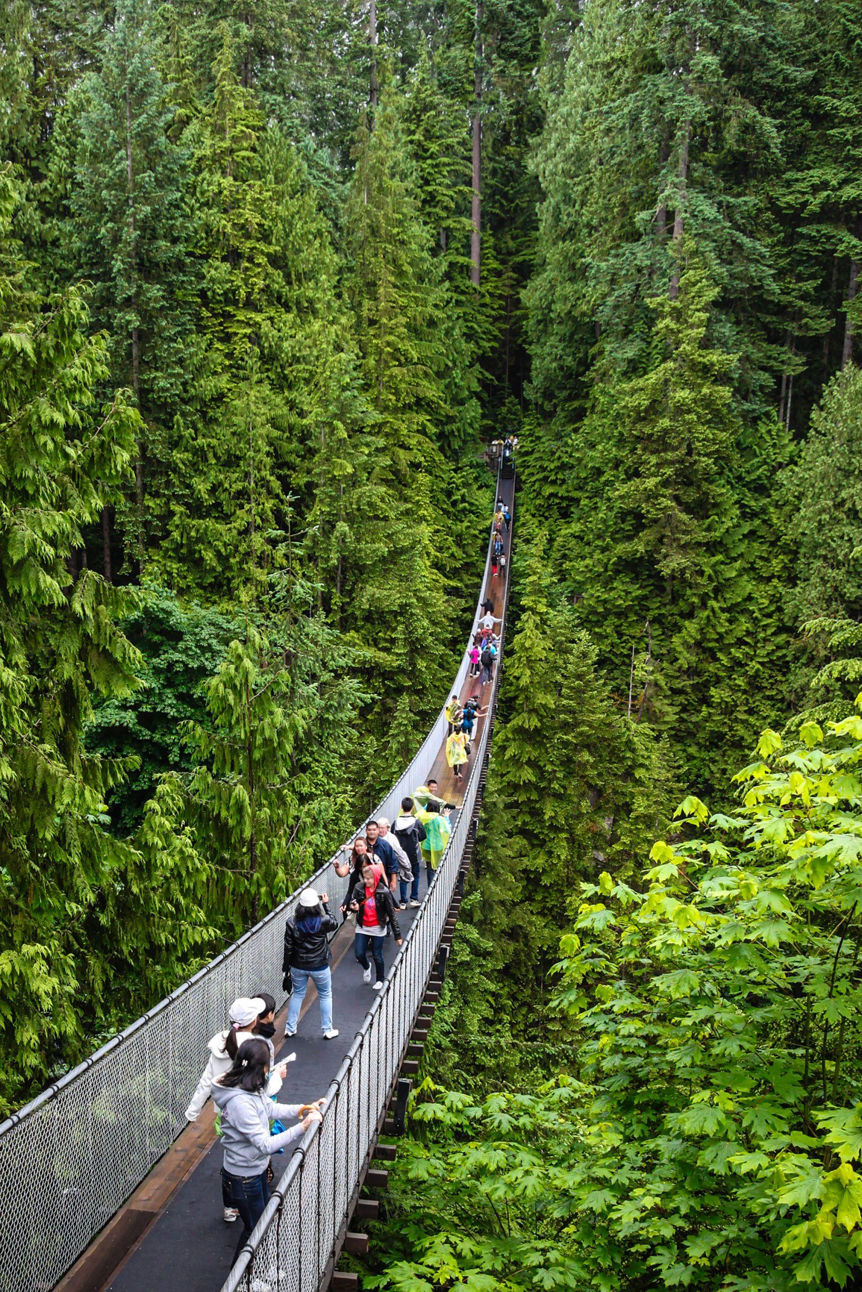 The famous suspension bridge at Capilano Suspension Bridge Park.