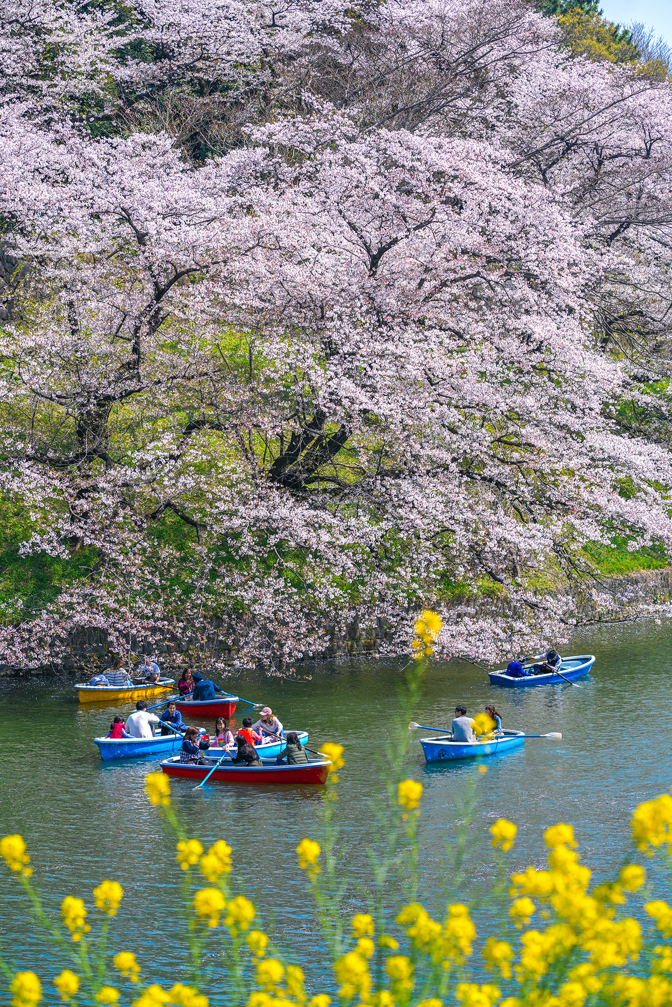 How to rent a boat at Chidorigafuchi Park.